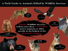 A Field Guide to Animals Killed by Wildlife Services